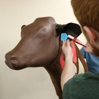 Bovine injection Ear Replacements (10 pairs)