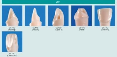 Abutment, Cavity Preparation Tooth Model (#21)
