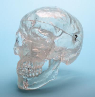 A20/T - Transparent skull
