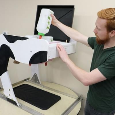 Bovine Milking Udder Simulátor