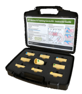 Bovine AI Cervix Training Model