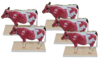 Small Cow Bundle (5 Pack)
