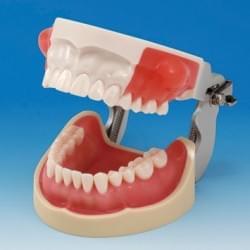 Oral Surgery Area