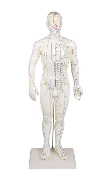 Acupuncture figure, male, 50 cm