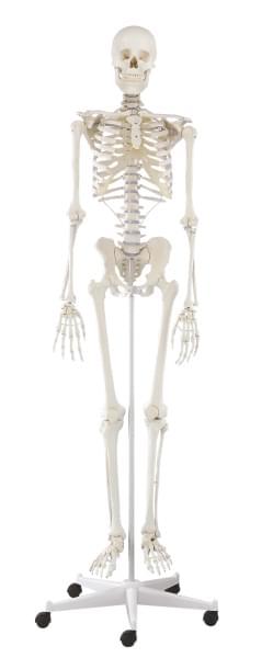 3001 - Skeleton Willi, standard
