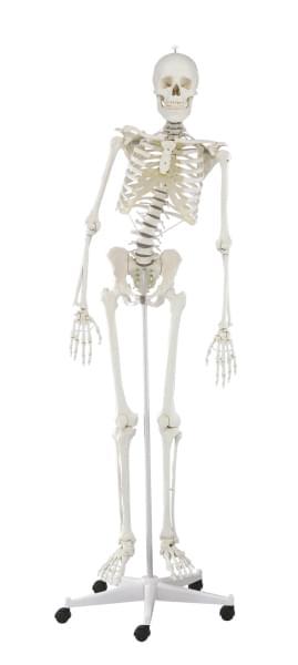 3014 - Flexible Skeleton Hugo