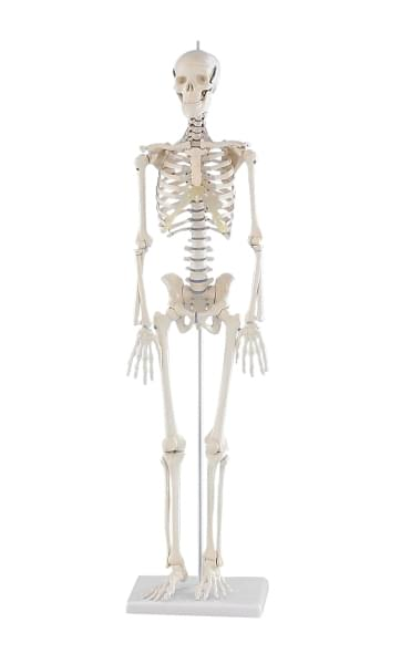 3030 - Miniature Skeleton Patrick