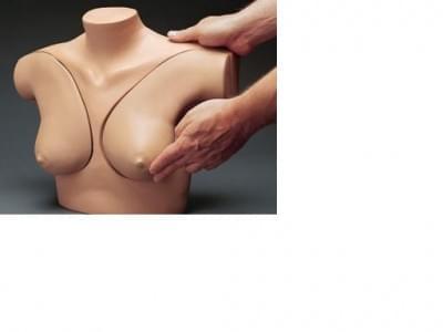 S230.42 - Model pro samovyšetření prsou