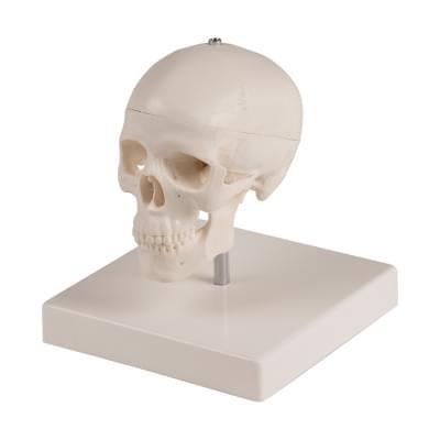 4650 - Miniature skull, 3 part