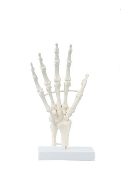 6040 - Hand, block model