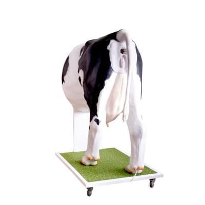 Kráva Emma - pokročilý simulátor pro inseminaci krávy
