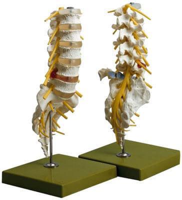 QS 66/1 - Lumbar spine