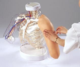 Model pro nácvik intramuskulární injekce do nadloktí