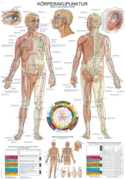 "Chart ""Body acupuncture"", 50 × 70 cm"