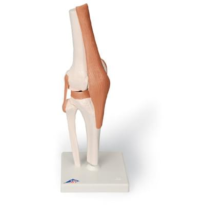 A82 - Functional Knee Joint