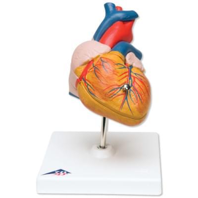 G08 - Classic Heart, 2 part