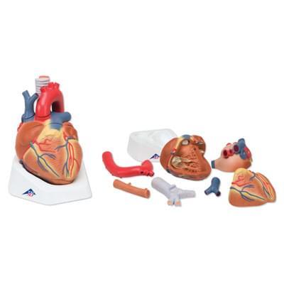 VD253 - Heart, 7 part