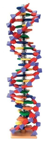 Pokročilý model miniDNA (22 vrstev)