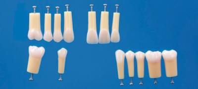 2-Layered Tooth Model A20A-200 (14 teeth set)