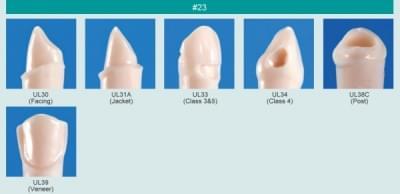 Model zubu s klínovým defektem (zub č. 23)