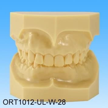 Resin Malocclusion Model (class II division 2 deep overbite)