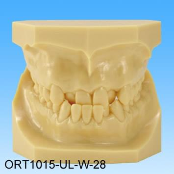 Resin Malocclusion Model (class II reversed occlusion)