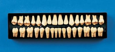 2× Size Tooth Model C12-AT.1A (32 teeth set)