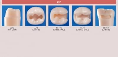 Abutment, Cavity Preparation Tooth Model (#37)