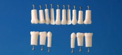 Simple Root Primary Tooth Model (#85))