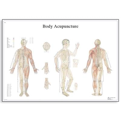 VR1820L - Body Acupuncture