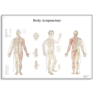 VR1820UU - Body Acupuncture