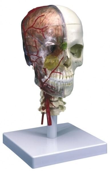 A283 - Luxury system skull