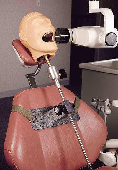 SB23463 - X-Ray Dental Manikin