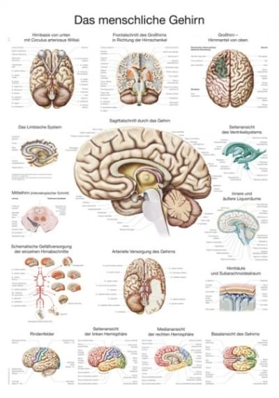 AL114 - Chart The human Brain