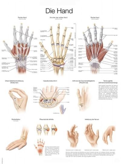 AL129 - Chart The hand