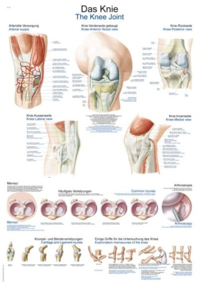 AL147 - Chart The knee
