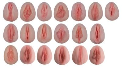 L222 - Vulva-Casts showing antomical differences