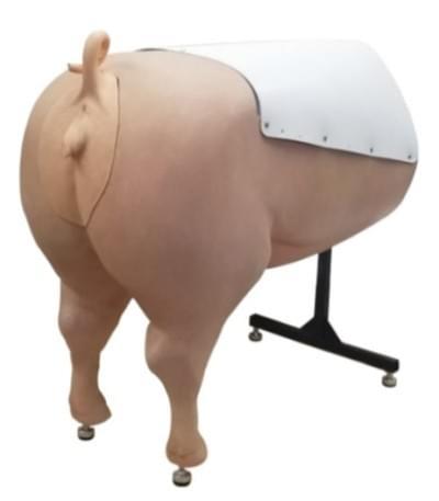 Swine Breeder