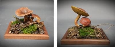 Set of 12 mushrooms - plastic models