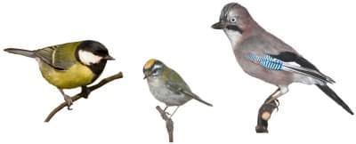Preparáty ptáků - ilustrační foto
