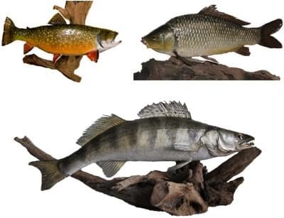Preparáty ryb - ilustrační foto
