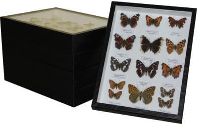 Sbírka motýlů České republiky