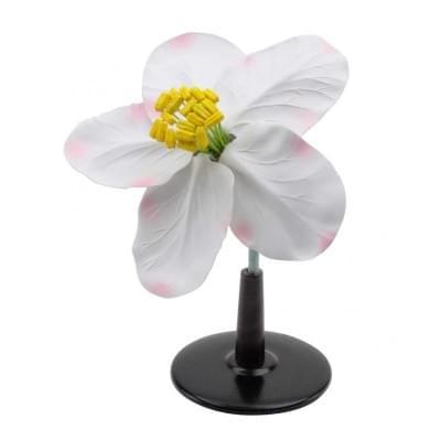 T21016 - Apple blossom
