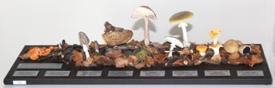 Set of types of fruiting bodies